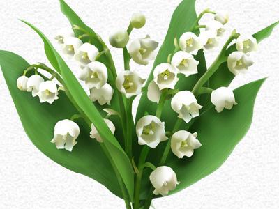 Flowerly Muguet Edition muguet flower flowerly lily of the valley green