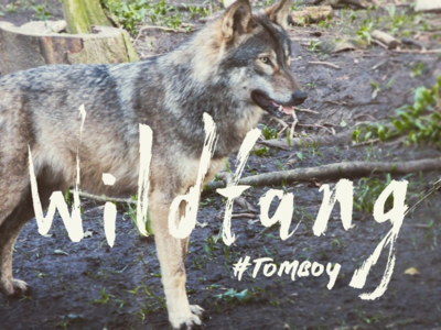 Wildfang Brush Lettering wild wolf hand lettering lettering brush lettering wildfang