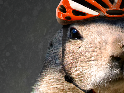 Happy Groundhogs Day