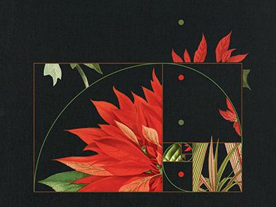 Fibonacci Poinsettia