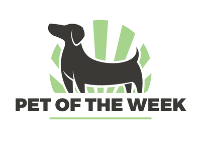 Pet Of The Week week pet green design dachshund dog logo pet of the week