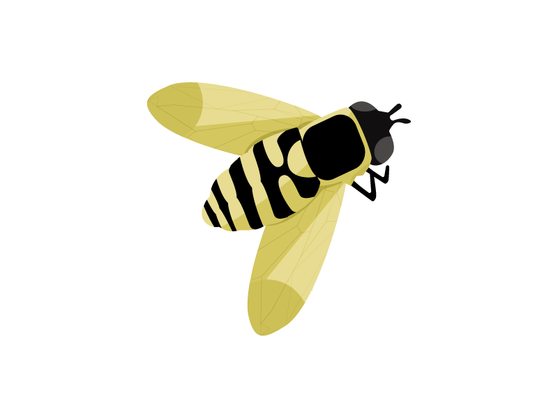 Bee graphic bumble bee bug insect vector illustration bee