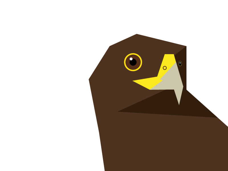 Hawk graphic vector illustration geometric hawk bird