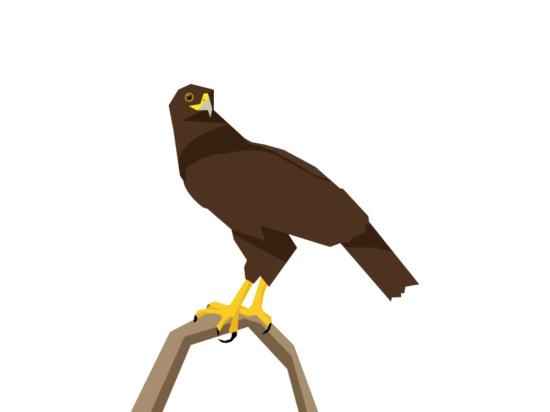 Hawk perch graphic vector illustration bird of prey bird hawk
