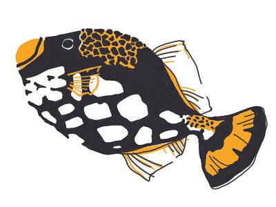 Clown Triggerfish Gillustration digital illustration digital art digital black orange gillustration fish illustration
