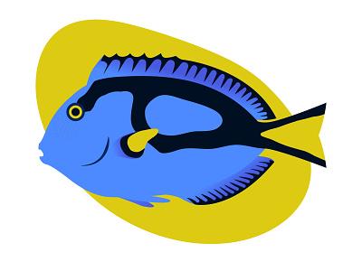 Blue Tang flat illustration flat yellow blue fish gillustration illustration