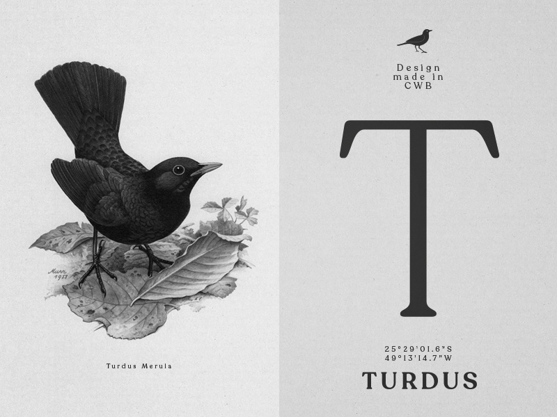 Turdus - Branding & Design social media indentity illustration curitiba graphic design branding turdus art director