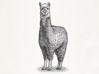Stipple illustration of a llama llama blackwhite line art dotwork hedcut woodcut engraving illustration stipple
