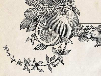 Detailed crop of engraved illustration woodcut stipple pen and ink package linocut line art label ink illustration hedcut engraving dotwork