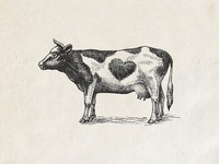 Cow in etching style