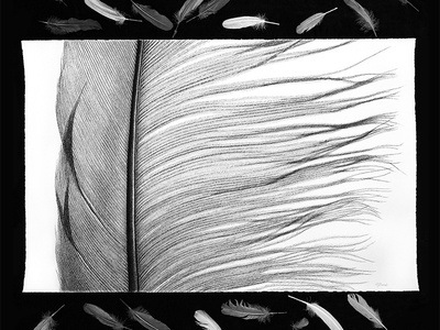 Quill on Paper - Drawing