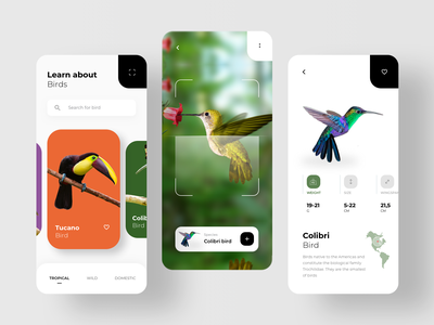 Bird Search With AR Scan camera machinelearning machine learning learning photo reality virtual augmentedreality augmented reality ar app rondesign