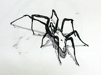Spider Sketch