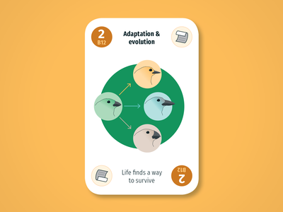 Diversity Deck – Biosphere: Adaptation and evolution beaks finches birds adaptation evolution biosphere maintenant science system earth sustainability product play game design card infographic illustration