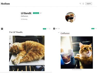 Lil' Bandit, Catfluencer photography influencer marketing influencer social social media blogs cat blogging cats seo content strategy satire