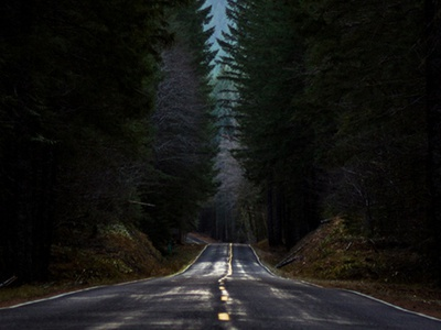 Banner Image - Forest Road avada template photo background design web design banner
