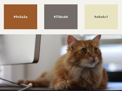 Lil' Bandit Color Scheme cats site design branding graphic design color palette