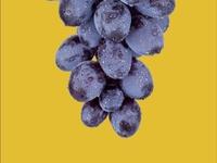 Grape Contrast