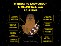 Infographic About Chewbacca avatars branding icons typography vector ui character design design icongraphy graphic design illustration