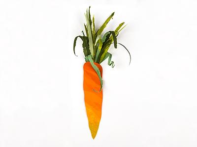 paper carrot carrot cut paper paper torn paper vegetable illustration