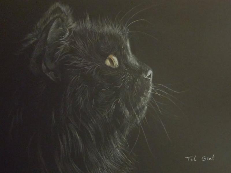 Cat - pencil realistic drawing black white art cats drawing realistic drawing pencil cat