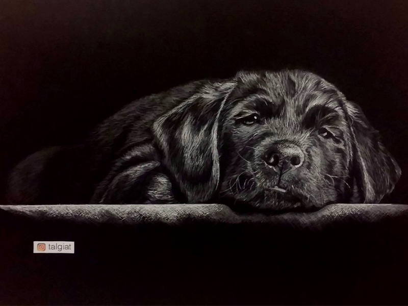 Dog - Realistic pencil drawing dogs dog pencil realistic drawing drawing art black white