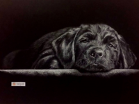 Dog - Realistic pencil drawing