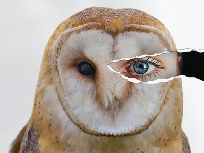 Behind the mask design photoshop face owl