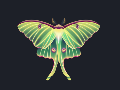 Luna Moth procreate illustration bug insects insect wing wings moth lunar luna
