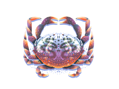 Crab claw crabs symmetry art procreate retro supply illustration texture seafood ocean crustacean crab