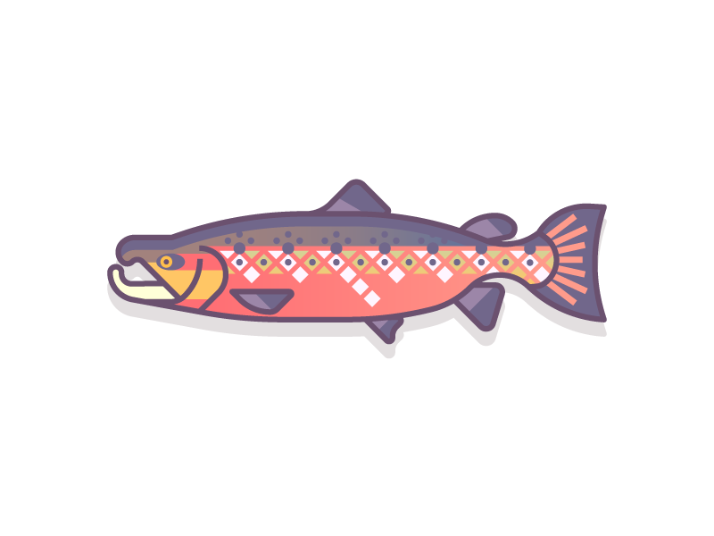 Atlantic Salmon (48/365) freshwater salmon colorful gradients design series daily design aquatic fishes fishy fish mount atlantic salmon fish salmon