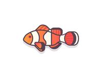 Clownfish (50/365)