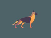 German Shepherd (89/365)