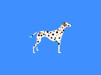 Dalmatian (90/365)