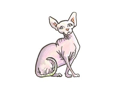 Skin Bag Cat (Sphynx Cat) sphynx tail no hair kitty kitten photoshop illustration sketch meow cat