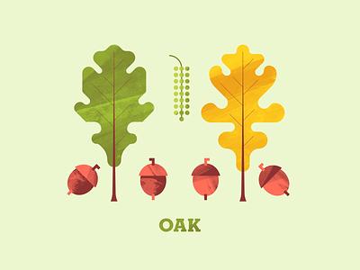 Oak tree illustration plant illustration plant autumn illustration texture oak tree flora flower seed acorn oak leaf tree oak
