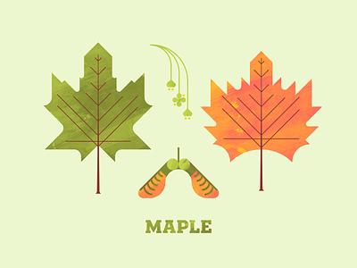 Maple autumn fall texture illustration plant illustration flower leaf leaves maple leaf flora plant seed maple