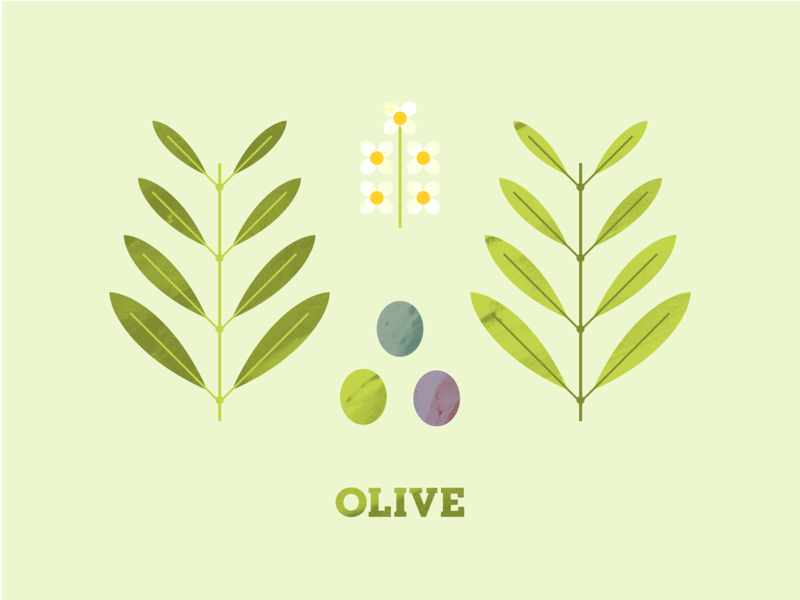 Olive flower illustration plant illustration illustration texture flower seed leaves leaf plant tree olives olive
