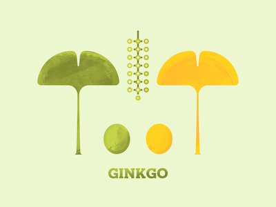 Ginkgo trees tree texture photoshop illustrator illustraion flora seeds seed flowers flower leaves leaf ginkgo biloba ginkgo