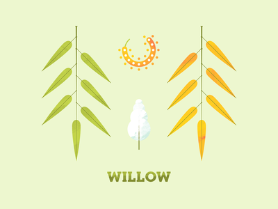Willow texture illustration art illustration plant illustration flower seed flora plant leaf leaves tree willow