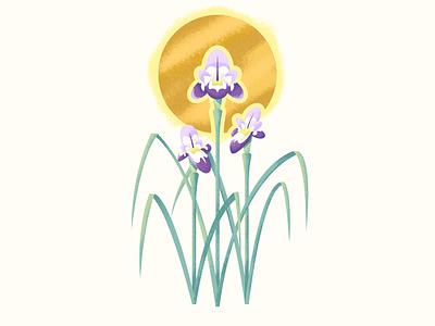 Iris illustration retro supply texture flower iris
