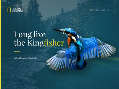 Kingfisher Nat Geo
