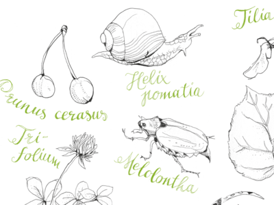 Scientific Illustration for Poem Book plants botanical linear drawing animals insect drawing illustration