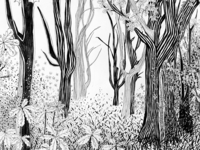 Forest illustration 2