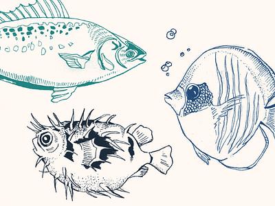Beer Bottle Label – Marine Life (Detail) maritime illustration pencil drawing bottle label sea life marine illustration