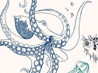 Beer Bottle Label – Marine Life (Detail 2) hand drawing maritime drawing bottle label design line drawing illustration