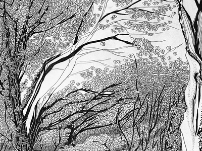 Forest Panorama illustration, part 3 art graphic handdrawn pencil tree illustration forest drawing black and white