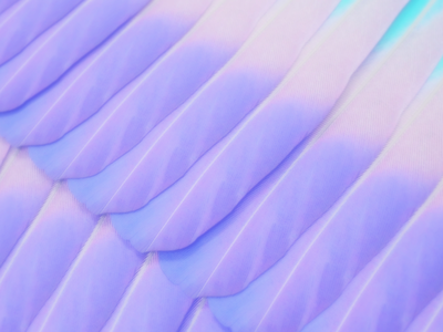 Feathers Wallpaper feathers illustration render art design digitalart graphicdesign 3d piacentino