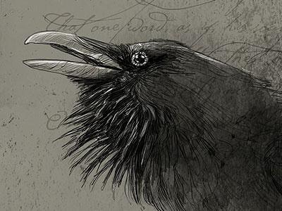 Bird#2 raven wacom tablet digital illustration bird