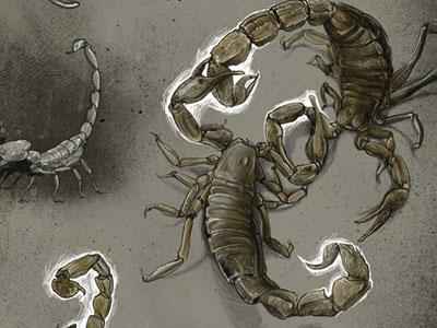 Scorpion animals wacom tablet digital illustration scorpion